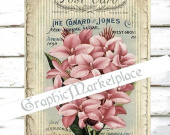 Postcard Hyacinth Flowers Large Image Instant Download Vintage Transfer Fabric digital collage sheet printable No. 410