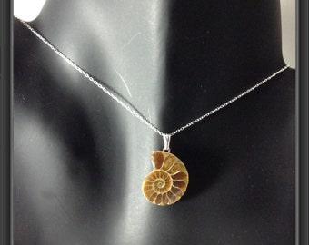 Ammonite pendant with sterling silver chain