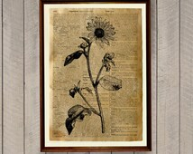 Sunflower print Floral poster Rustic decor WA57