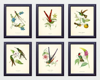 SET of 6 8x10 Art Prints Antique HUMMINGBIRDS Vintage Botanical Plates Natural History Illustration Home Room Wall Art Decor to Frame BN0507