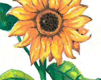 Sunflower Watercolor Print