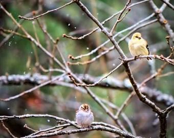 Snowy Birds, Grumpy Birds, Fine Art Photography, Bird Photography, Winter Photography, Falling Snow Flakes