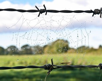 Spider Web on Barbed Wire, colour photograph, instant digital download, wallpaper, screensaver