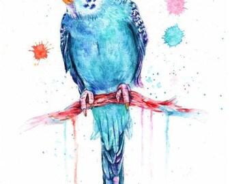 blue budgie - mounted original painting
