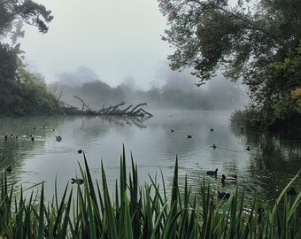 Foggy Morning on Stow Lake with Ducks