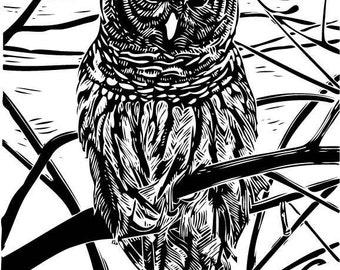 Barred Owl (Strix varia) - Linoleum Block Print - 12x9