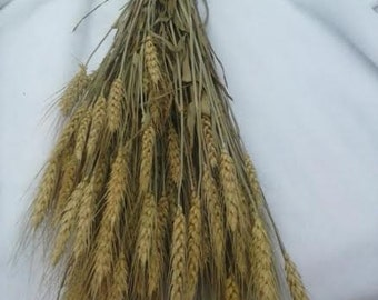 "6 Bunches Natural Wheat 22""-25""  - Perfect For Your Rustic Country Wedding Decorations"