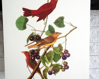 Audubon Print - Summer Tanager - Great Valentine's Day Decor or Gift