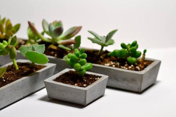 Concrete succulent planter set mini rectangular - Rectangular succulent planter ...