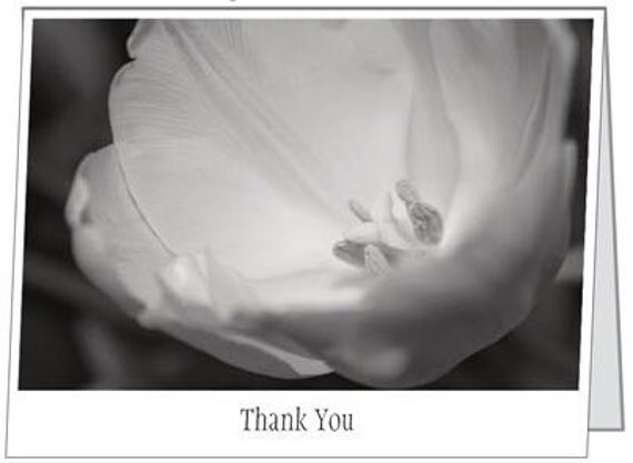 Black And White Tulip Photography Black Amp White Tulip Photo