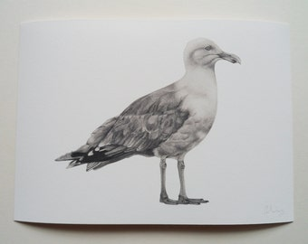 Herring Gull Illustration Giclee Print, A4