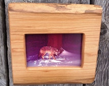 wood picture frame, 4 X 6 photo frame, live edge, rustic, wildlife photo, handmade, country primitive, wall hanging, cherry, coyote.