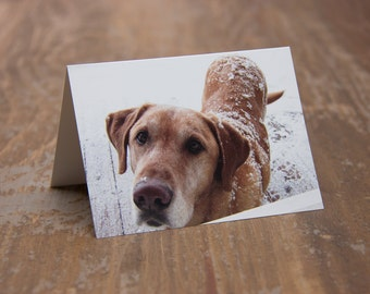 Snowy Puppy - Greeting Card - Pack of 4