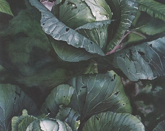 Cabbages Watercolor Print