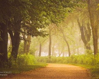 ENCHANTED FOREST Nature Rustic Path Green Trees Fog Mist Surreal Whimsical Soft Solitude