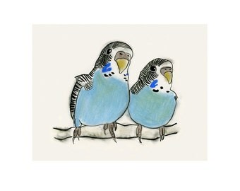 Bird print. Blue Budgerigar birds -  6 X 4 print - 4 for 3 SALE