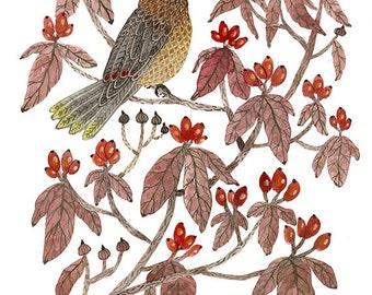 cedar waxwing original watercolor painting