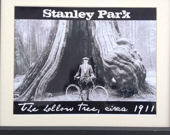 1911 Stanley Park Hollow Tree print