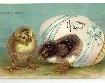 VINTAGE EMBOSSED POSTCARD- Chicks, Egg with blue Ribbon -Easter's Greettings- back 3 lines, not written - slight mark on bottom right corner