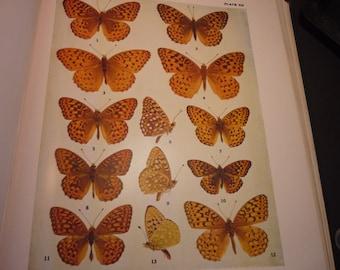 Vintage - Butterflies - 13 Gorgeous Argynnis specimens - 1945 color plate - vibrant color prints - Natural world framable