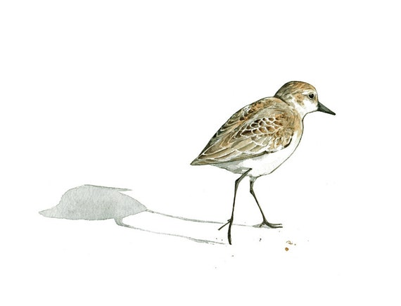 Sandpiper Print Beach Bird Watercolor Painting