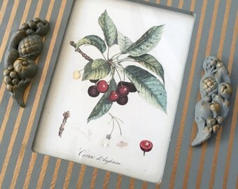 Vintage French Country Botanical Fruit Prints in Gold and Sage Green Oval Frames Set of Two Apple and Cherries Cottage Chic Wall Decor