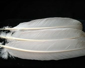 x3 Real Turkey Wing Feathers: Imitation Eagle, T9171 - meleagris gallopavo