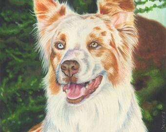 Custom Pet Portrait in Colored Pencil - 10x10