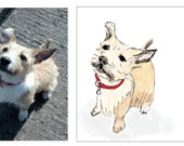 Custom dog drawing from photograph by stephanie b illustration