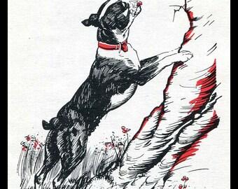 Boston Terrier Dog Print Illustration Diana Thorne 1940's Children's Book Art Red Black