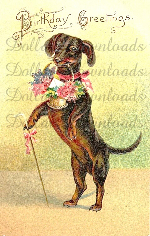 Old Fashioned Dog Meme