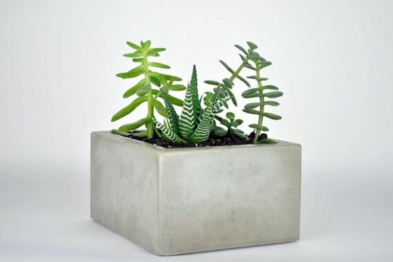 Small Rectangular Concrete Planter