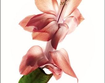 Floral Print, Schlumbergera Botanical Print, Floral Print Art, Minimalist Art, Red, Thanksgiving Cactus Photo, Floral Wall Decor