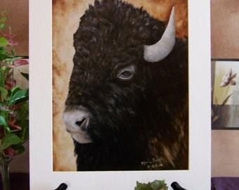 Buffalo, Bison, Wildlife, Animal Art Print 11inx14in