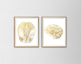 Human Brain Print, Anatomical Print, Human Anatomy Print, Medical Poster, Doctor Poster, Faux Gold Foil Print, Gold Office Poster