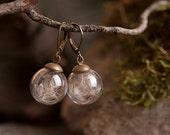 Dandelion earrings, nature earrings, white earrings, dandelion dangle earrings, antique brass earrings, glass vial earrings, glass earrings