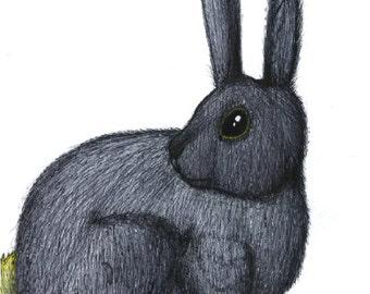 Rabbit: Ink Illustration