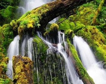 Ho Rainforest Waterfall, Olympic Peninsula, Washington, trees, stream, water, green, brown, nature, color photography, landscape, 5x7 matted