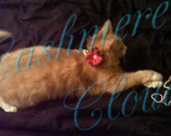 Poinsettia Holiday Pet Collar