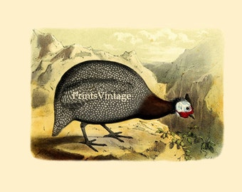Guineafowl - Printable Image Instant Download