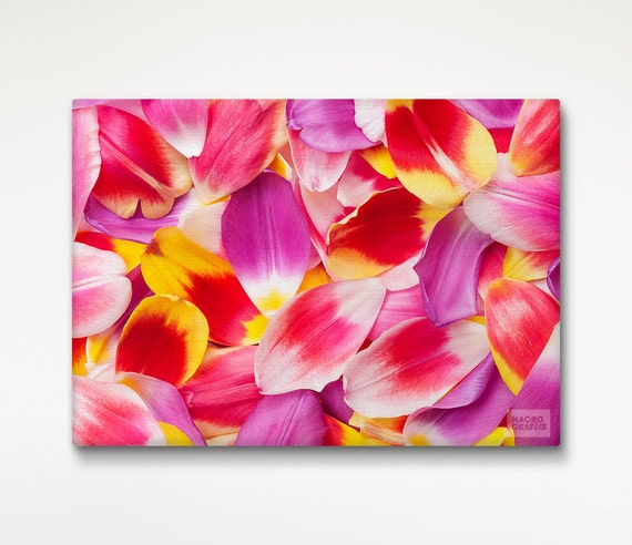 Colorful Wall Art Tulip Petals, Flower Photography, Fine Art Print