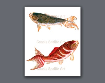 Minimalist art decor koi fish wall art print 1 koi is symbol for Koi fish wall decor