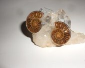 Ammonite Fossil Earrings Nautilus Shaped Earth Antiques For Your Ears -Arrives in Lovely Gift Wrapping