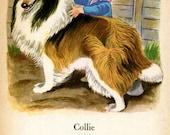 Collie Dog Illustration and Poem Tibor Gergely Vintage 1950s Dog Art