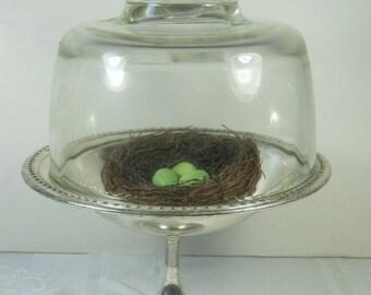 Vintage GLASS DOME CLOCHE Specimen Display Tea Cup Cover WEDDiNG Kitchen