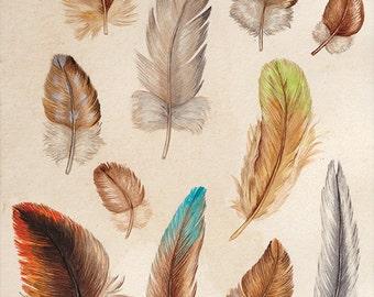 Australian Bird Feathers A4 Print