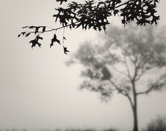tree photography, landscape photography, fog, foggy, nature, trees in fog, September Trees