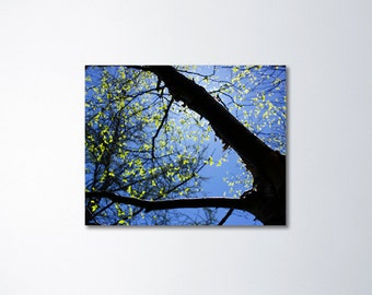Abstract Canvas, Abstract Nature Art, Forest Canvas Wall Art, Large Tree Art, Tree Branches, Nature Decor, Fine Art Canvas, Birch Wall Art