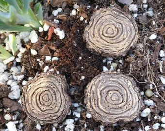 Tree Stump Stepping Stones