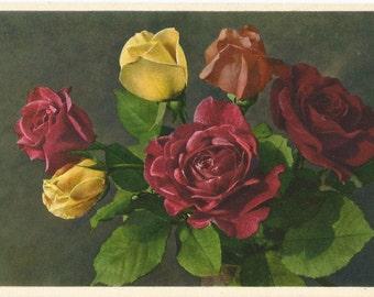 Roses by Thor E. Gyger, Adelboden, Switzerland - Unused Vintage Botanical Postcard, ca. 1940 #1967